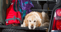 Car Care Tips for Your Post-Vacation Blues